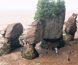 Hopewell Rocks, Low Tide